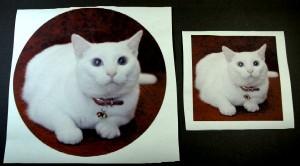 マウスパッド用画像(丸)とタイル用画像(四角)