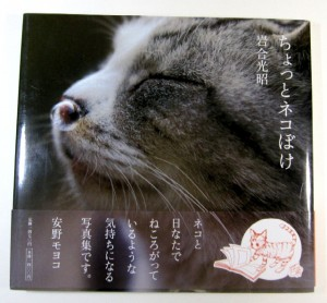 すごいね。岩合さんはどうやってネコ写真を撮ってるんだろう!?
