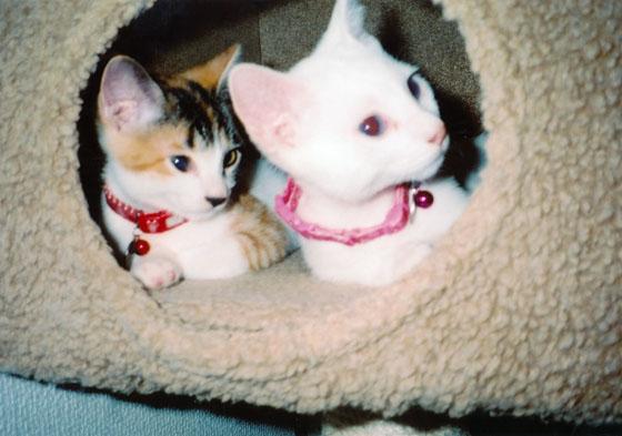 来た当初は二匹一緒にボックスに入っていました(現在は無理です)