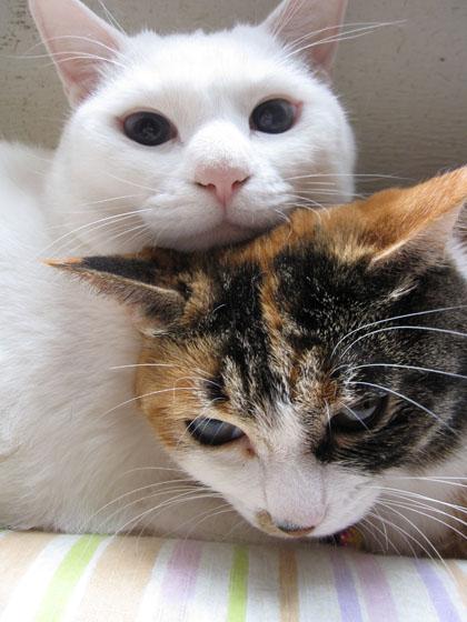 ナナとミミ、どっちがお姉さんなのか不明。一応ナナということに・・・