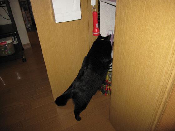 こっちの扉も開けてクダサイ